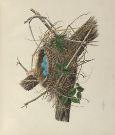 v. 1 - Illustrations of the nests and eggs of birds of Ohio : - Biodiversity Heritage Library