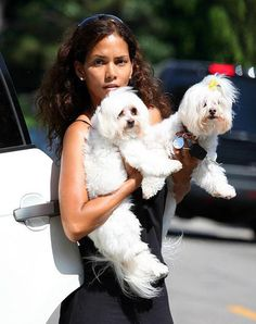 Halle Berry's pampered pups
