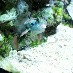 I love this fish
