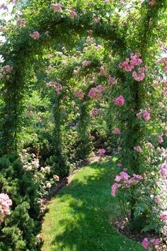 Tunnel of roses. Use no-mow lawn or hardscape in path for drought-stricken areas.