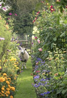 What a garden! With it's own sheep, no less!