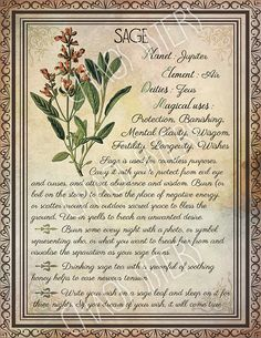 Printable Herbs Book of Shadows Pages Set 2 Herbs & Plants Correspondence Grimoire Pages Witchcraft Wicca Printable BOS Wicca Herbs, Witchcraft Herbs, Witchcraft Books, Green Witchcraft, Magic Herbs, Herbal Magic, Plant Magic, Herbal Witch, Wiccan Spell Book