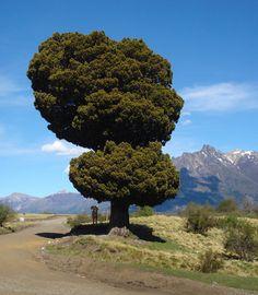 Parque Nacional Lanín, Junín de los Andes, a través de la Ruta Provincial 6. Argentina