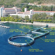 swimming with Dolphins -Marmaris Turkey