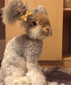 Wally Instagram Bunny English Angora Rabbit | Trust us, this is the cutest bunny you'll ever see. #refinery29 http://www.refinery29.com/2015/06/88445/wally-instagram-rabbit