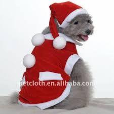 para perros schnauzer miniatura