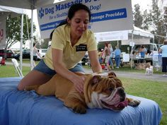 bulldogs love massages