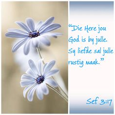 Condolence Messages, Condolences, Scripture Quotes, Bible Verses, Sympathy Quotes, Inspirational Qoutes, Afrikaans Quotes, Happy Birthday Images, Funeral