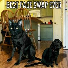 Funny, Memes, Pictures: funny-animals-1-2