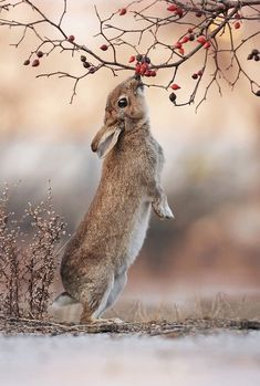"Galerie Bilder & Fotos - Best of - Wildkaninchen ""Wildkaninchen You are in the right place about trends 2019 Here we offer you the - Animals And Pets, Baby Animals, Funny Animals, Cute Animals, Wild Animals, Autumn Animals, Wild Rabbit, Rabbit Art, Wild Bunny"