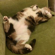 My girl... Tarçın the cat:)