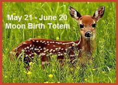 Animal Birth Totems | Balanced Women's Blog Animal Spirit Guides, Spirit Animal, Power Animal, Kangaroo, Giraffe, Deer, Totems, Halloween, Photos