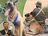 The Belgian Malinois, who Prince Harry met during his visit to Kruger National Park, has been awarded the gold medal by vet charity PDSA, in a video starring Golden Globes host Ricky Gervais.