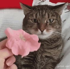 When you put a flower on your cat's head.