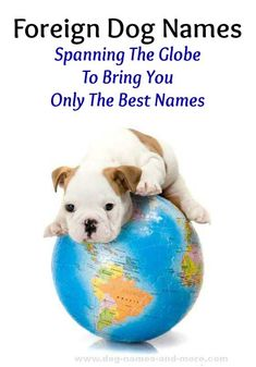 This Bulldog puppy is spanning the globe looking for foreign dog names!