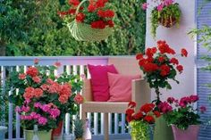 Geraniums on the balcony Balcony Garden, Terrace, Starting A Garden, Outdoor Furniture Sets, Outdoor Decor, Outdoor Living, Floral Wreath, Outdoor Structures, Table Decorations