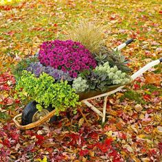 This wheelbarrow highlights seasonal purple mums, purple flowering kale and the purple-tinged leaves of bugleweed. 'Fox red' curly sedge adds a dramatic spray behind the mums. Other plants include trailing bacopa, spurge and spiky santolina. Dream Garden, Garden Art, Flowering Kale, Purple Mums, Fall Containers, Fall Flower Arrangements, Pot Plante, Autumn Garden, Spring Garden
