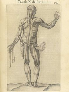 Page 74 of Juan Valverde de Amusco's Anatomia del corpo humano, 1560 featuring the backside of a flayed cadaver showing its muscles. From the collection of the National Library of Medicine. Visit: http://www.nlm.nih.gov/exhibition/historicalanatomies/valverde_home.html