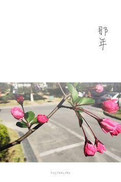 海棠花开,起风的日子就来了;情绪低落,大姨妈就在转角了。(Mar.)