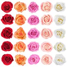 Find Collection Beautiful Roses Isolated On White stock images in HD and millions of other royalty-free stock photos, illustrations and vectors in the Shutterstock collection. Royalty Free Images, Royalty Free Stock Photos, People Icon, White Stock Image, Business Icon, Beautiful Roses, Icon Set, Holidays And Events, Health And Beauty