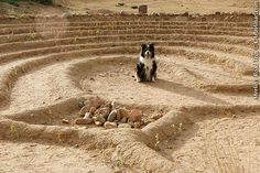Dogs on labyrinths?