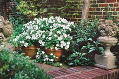 Use white to lighten your garden. Pots of white impatiens brighten this shady corner with hundreds of blooms.