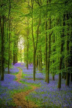 Parque de Ashridge é um parque que encontra-se dividido entre dois condados, o Hertfordshire e o Buckinghamshire, ficando próximo da fronteira com o Bedfordshire. Fica situado nas Chiltern Hills, uma área de excepcional beleza natural. A propriedade contém 20 km² de bosques (conhecidos como Ashridge Forest), que suportam uma rica variedade de vida selvagem. Inglaterra, Reino Unido.