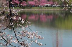 308:「三ッ池公園」@三ッ池公園