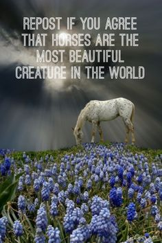 Repost if you agree that horses are the most beautiful creatures in the world.