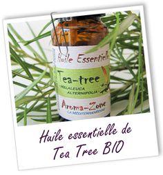Fiche bibliothèque technique huile essentielle de Tea Tree BIO - Melaleuca alternifolia