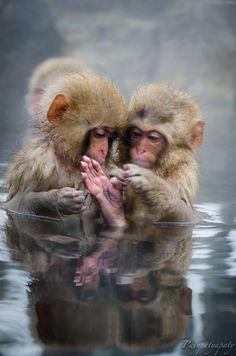 "Bath-time!  500px / Photo ""liitle monkeys"" by Marcosjra and Patypatyapaty @500px.com"