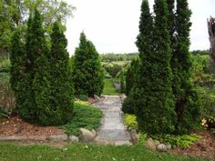 View to the allee at Spring Valley Roses.