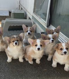 So cute i would love to live with thT many dogs so cuteeeeeeeeee