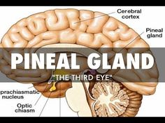 Pineal Gland: One Of The Biggest Secrets Kept From Humanity