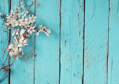 Photo Backdrop, Photography Backdrops, Vinyl Photography Backdrops, Alternative Backdrops : Blue wood backdrop with flower for newborn Trendy Wallpaper, Flower Wallpaper, Wallpaper Backgrounds, Floral Backgrounds, Picture Backdrops, Vinyl Backdrops, Photo Halloween, Halloween Pictures, Fabric Backdrop