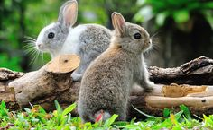 cute forest animals in real life - Google Search