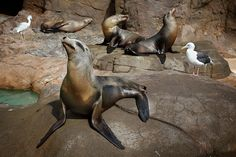 Sea Lions at SeaWorld San Diego