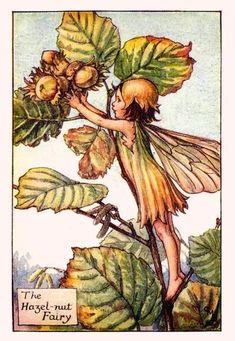 """""""Fairies of Autumn: The Hazelnut Fairy"""" by Cicely Mary Barker."""