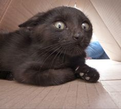 See Freaked out Cats! We think #2 is having a heart attack!