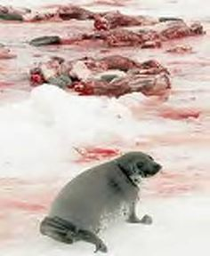 Boycott Canadian industry till they stop killing baby seals for their fur...