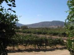 Ruta del Vino - Valle de Guadalupe, en la Baja California.