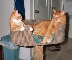 Rupert and Baz