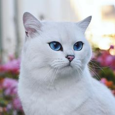 Why is this cat prettier than me?