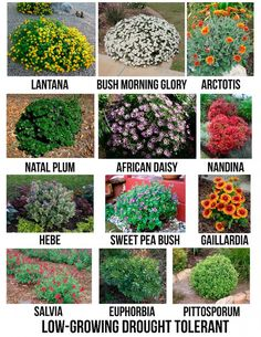 Gardens Discover Creative Landscape Ideas with Big Impact - front yard landscaping ideas with rocks Garden Shrubs Landscaping Plants Planting Shrubs Luxury Landscaping Landscaping Company Garden Soil Bushes And Shrubs Landscaping Melbourne Garden Beds Front Yard Landscaping, Backyard Landscaping, Luxury Landscaping, Landscaping Company, Landscaping Melbourne, Curb Appeal Landscaping, Diy Landscaping Ideas, Steep Hillside Landscaping, Small Gardens