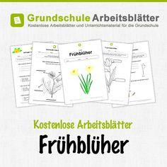 Kostenlose Arbeitsblätter und Unterrichtsmaterial für den Sachunterricht zum Thema Frühblüher in der Grundschule.
