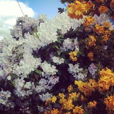 pretty portland flowers