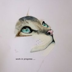 kitty, work in progress, colour pencils, A3
