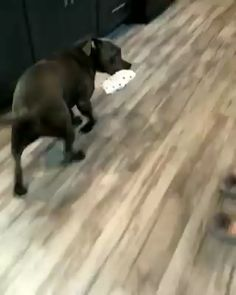 Dog opening his Christmas present! – WoofAdvisor Pet Tech, Pet Health Care, Pet Travel Tips, Pet Care! Cute Animal Videos, Funny Animal Pictures, Cute Little Animals, Cute Funny Animals, Cute Dogs And Puppies, I Love Dogs, Doggies, Funny Dog Videos, Funny Dogs