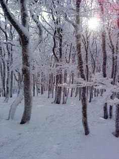 Forest, Le Valtin, Vosges