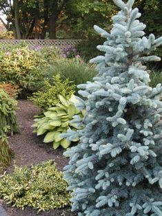 evergreen landscaping - Google Search